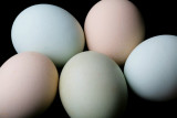 e851c80e9e5d251 What is the best way to clean chicken eggs?